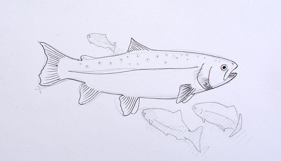 illustration for skye and lochalsh rivers trust